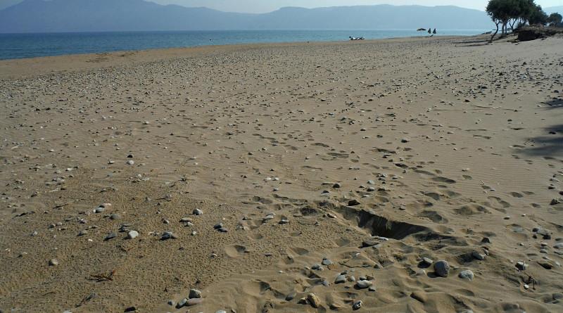 Sea turtle nest hatching in Kissamos