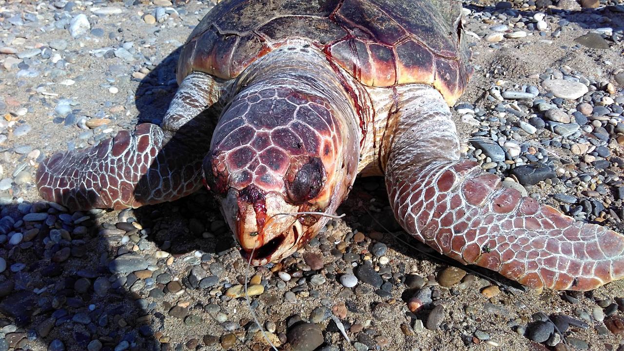 Гулять во сне с черепахой — такой сон предвещает долгую и счастливую жизнь.