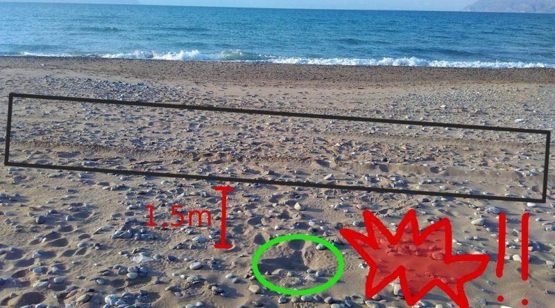 Turtle hatchlings in Korfalonas
